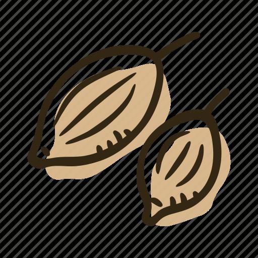 coriander, coriander seeds, herb, ingredient, plant, seeds, spice icon