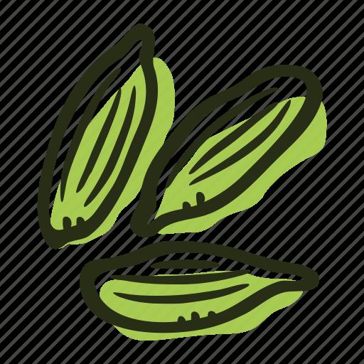cardamom, food, green cardamom, herb, ingredient, plant, spice icon