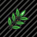 bay, leaf, spices, seasoning icon