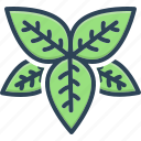 basil, greenery, ingredient, lamiaceae, spice, thyme, tulsi icon