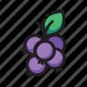 berries, fruit icon