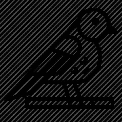 Animal, animals, bird, ornithology, zoo icon - Download on Iconfinder