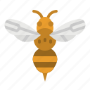 animals, bee, fly, insect, kingdom