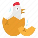 animals, chick, chicken, egg, spring