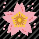 flower, garden, plant, sakura, spring