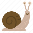 animal, animals, kingdom, snail, wildlife