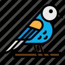 animal, animals, bird, ornithology, zoo