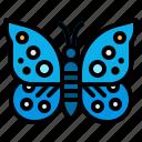 butterfly, flower, nature, pollen, spring