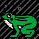 amphibian, animal, animals, frog, wildlife