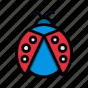 animal, animals, ladybug, wild, wildlife