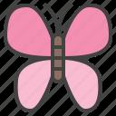 butterfly, insect, papillon, staroffice, summerbird