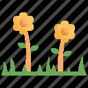 flower, nature, spring, plant, blossom, petals, botanical