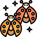 ladybug, garden, spring, insect, animal