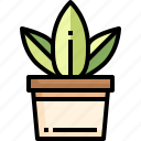 plant, pot, tree, nature, leaf, environment