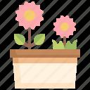 flower, botanical, pot, garden, blossom