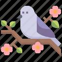 pigeon, wings, bird, animal, peace
