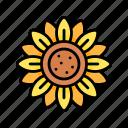 flower, sunflower, blossom, spring, nature, season