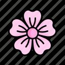 flower, sakura, blossom, spring, nature, season