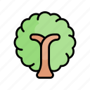 tree, blossom, plant, forest, spring, nature, season