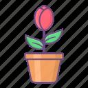 flower, spring, plant, floral, rose, leaf