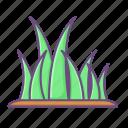 grass, leaf, lawn, plant, tree, botany