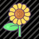 sunflower, garden, plant, nature, floral