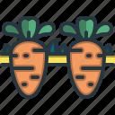 carrots, farming, agriculture, food, harvest