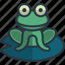 frog, zoology, animal, kingdom, wildlife, animals