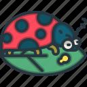 ladybug, environment, insect, nature, animals, leaf