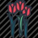 tulip, garden, bloom, spring, flowers