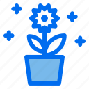 garden, pot, spring, flower, nature