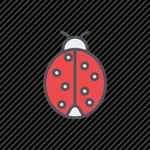 bug, filled, ladybug, outline, spring, summer icon