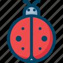 bug, insect, lady, ladybug, nature