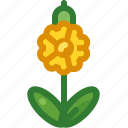 cowslip, flower, growth, nature, plant, spring, yumminky icon