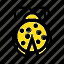 beetle, bug, ladybird, ladybug