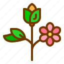 flower, nature, spring, summer, tree icon
