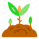 farm, ground, growth, plant, sprout