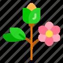 flower, nature, spring, summer, tree