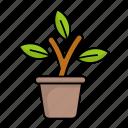 flower, pot, plant, nature, leaf, stem, environment