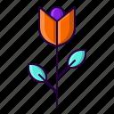 flower, garden, plant, rose