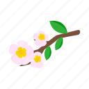 blossom, branch, floral, flower, isometric, nature, spring icon