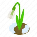 blossom, flower, isometric, nature, plant, snowdrop, spring icon