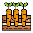 carrot, healthy, organic, vegetable