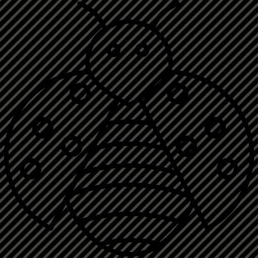 Ladybug, insect, bug, animal icon - Download on Iconfinder