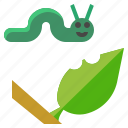 butterfly, caterpillar, insect, leaf, worm