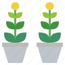 garden, ornamental, plant, plants, potted icon