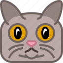 animals, avatar, cat, puss, square, tomcat, yumminky icon