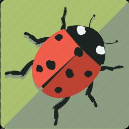 green, ladybug, leaf, nature icon