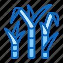 cane, plant, sugar icon