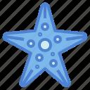 aquarium, life, ocean, sea, starfish